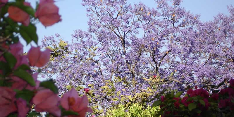 Spring in San Miguel